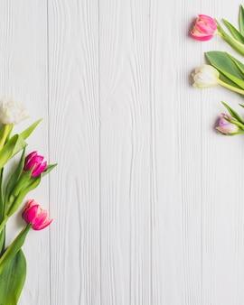 Hermosos tulipanes en blanco