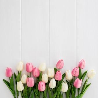 Hermosos tulipanes blancos y rosados sobre fondo blanco de madera.
