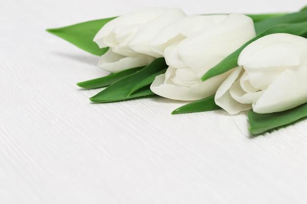 Hermosos tulipanes blancos