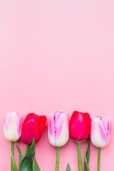Hermosos tulipanes brillantes colocados en fila