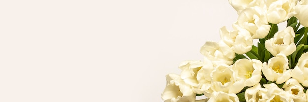 Hermosos tulipanes crema fresca en una luz
