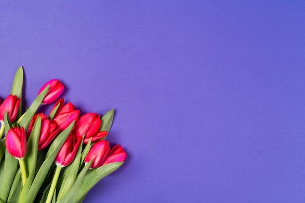 Hermosos tulipanes rojos sobre fondo azul.