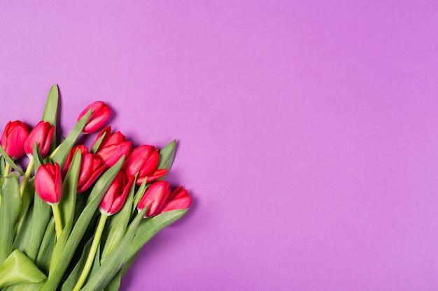 Hermosos tulipanes rojos sobre fondo morado. feliz día de la madre. espacio para texto. tarjeta de felicitación. hola concepto de primavera. tarjeta de felicitación. concepto de vacaciones copia espacio, vista superior. cumpleaños. copia espacio vista superior
