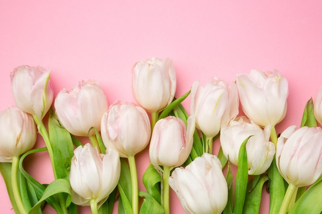Hermosos tulipanes rosados y blancos sobre fondo rosa