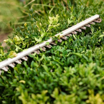 Herramienta de recorte de primer plano en arbusto