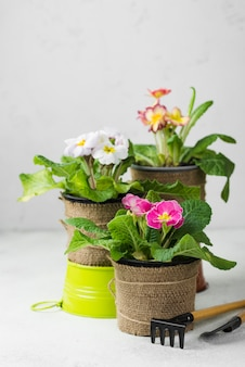 Herramientas de alto ángulo y macetas de flores
