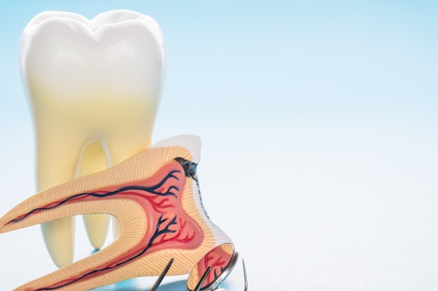 Herramientas dentales y anatomía dental sobre fondo azul.