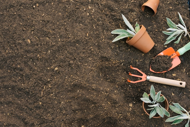 Herramientas dispuestas para jardinería en suelo.