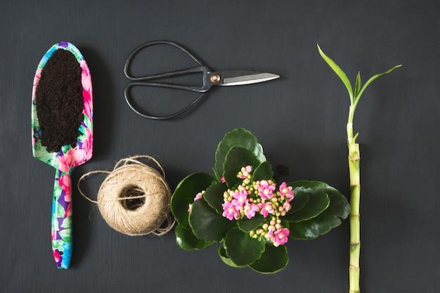 Herramientas de jardinería y bulbos de plantas en madera.