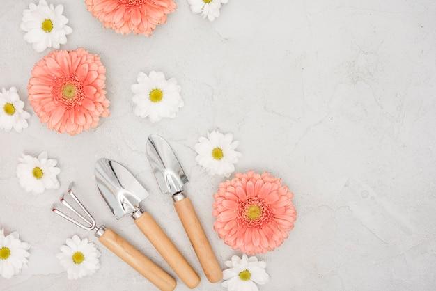 Herramientas de jardinería y gerbera con flores de margarita vista superior