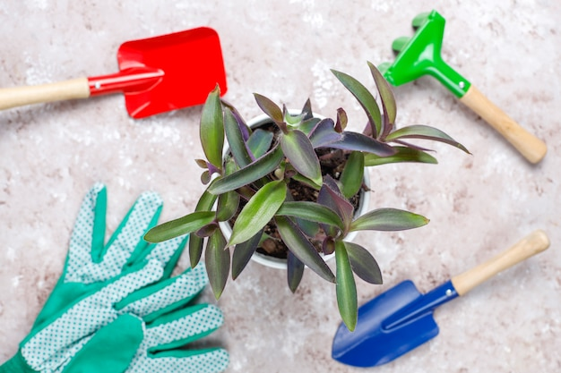 Herramientas de jardinería en mesa de luz con planta de casa y guantes
