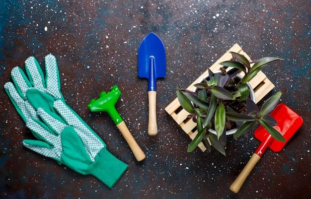 Herramientas de jardinería en mesa oscura con planta de casa y guantes