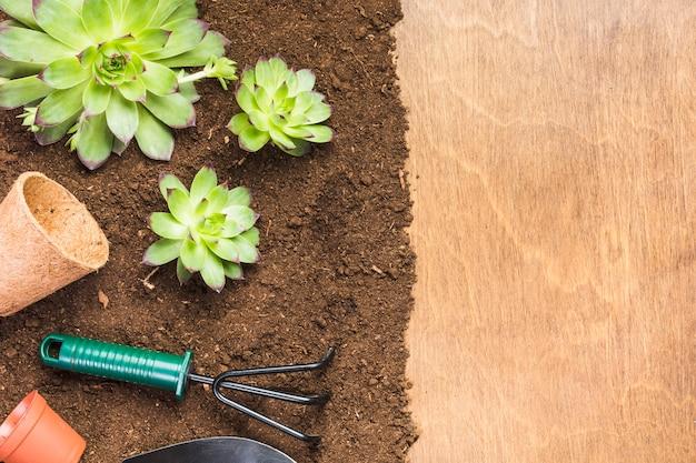 Herramientas de jardinería y plantas sobre la tierra vista desde arriba