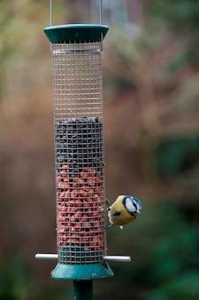 Un herrerillo en un comedero para pájaros