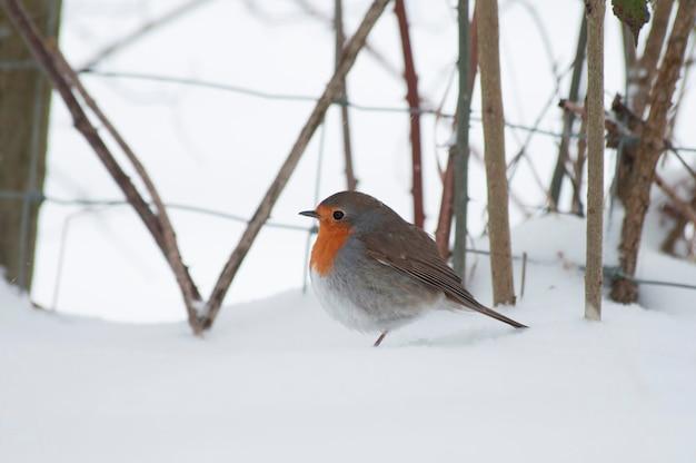 Un herrerillo en la nieve