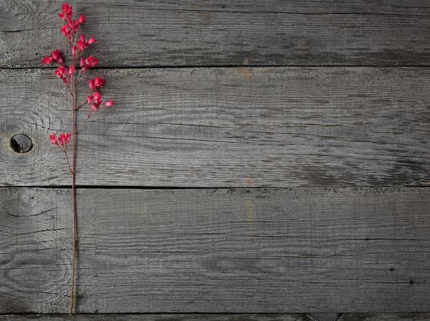Heuchera flor roja en flor en la superficie de las tablas viejas con una textura.