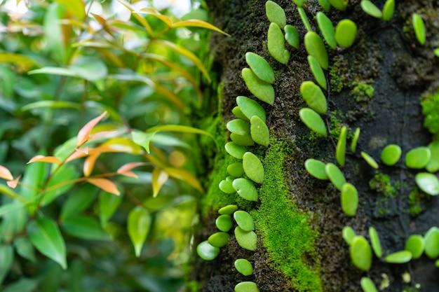Hiedra verde dave leaf en crecimiento en árbol en el jardín