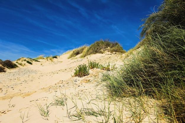 Hierba en la arena