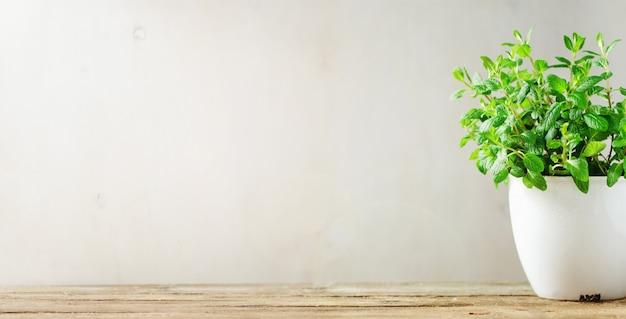 Hierba aromática verde fresca melissa, menta en bote blanco
