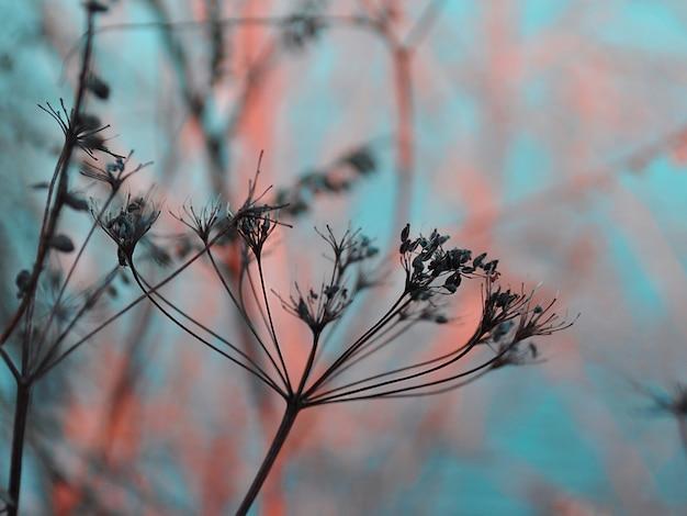La hierba en un campo contra el sol poniente. suave puesta de sol en invierno