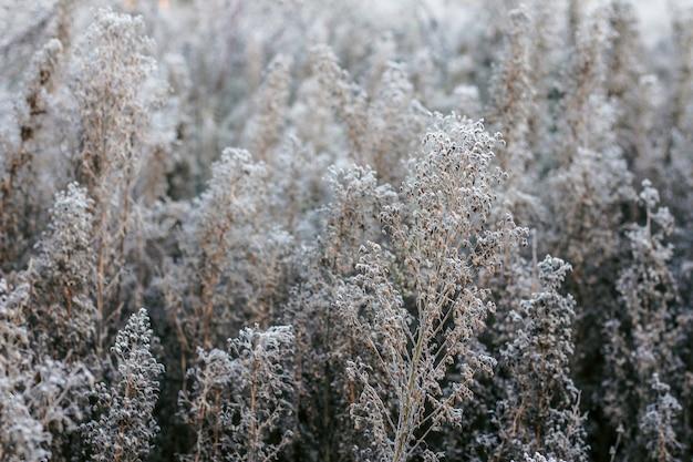 La hierba del campo está cubierta de escarcha. la primera helada en el otoño. fondo natural de otoño