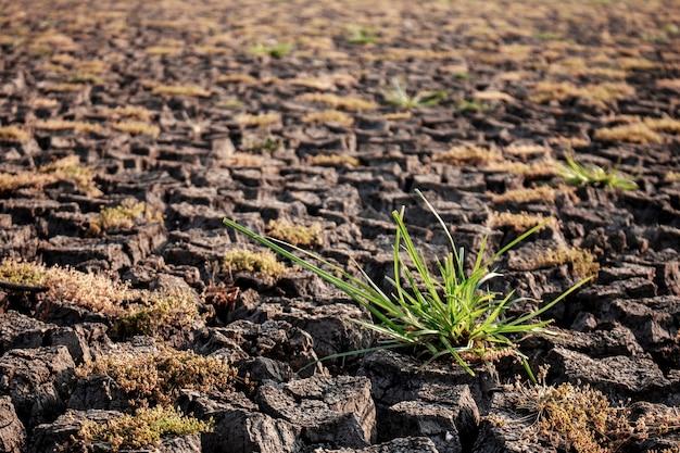 Hierba en el campo