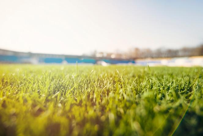 Hierba césped en el estadio