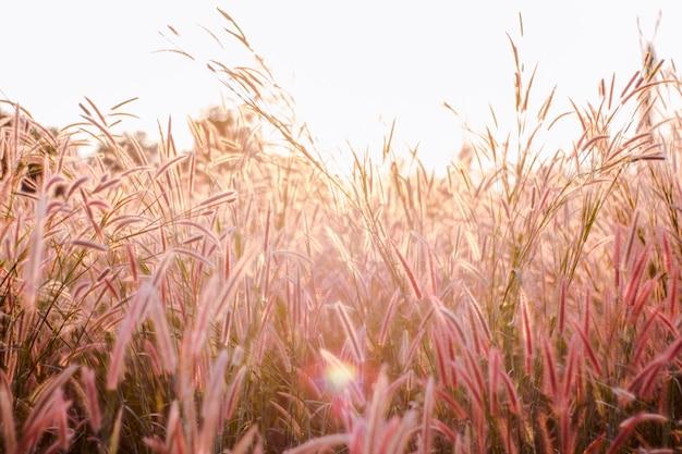 Hierba colorida de las flores hecha con el gradiente para el fondo