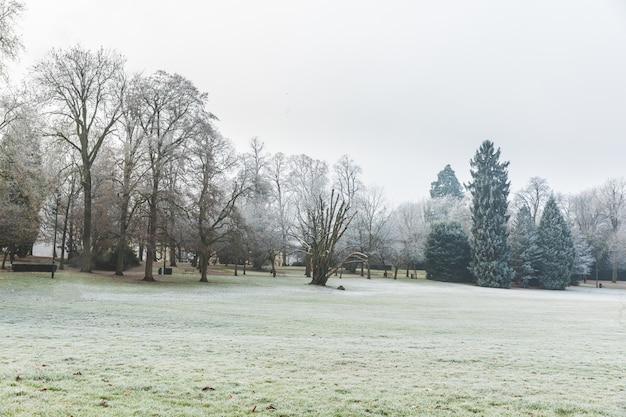 Hierba congelada y árboles en el parque en luxemburgo