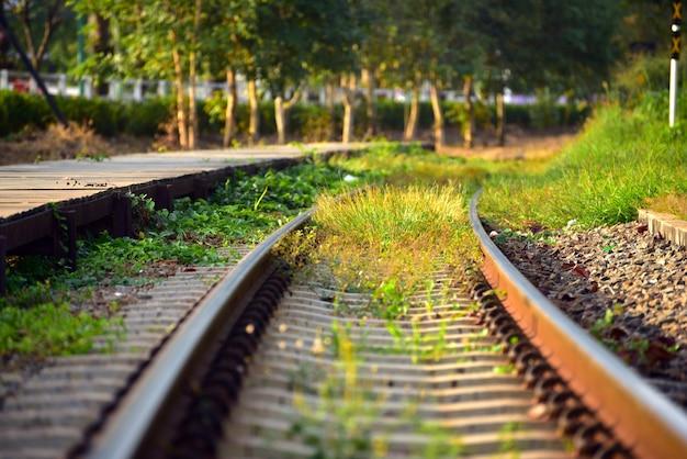 La hierba crece a lo largo del ferrocarril mientras que no hay trenes en la luz de la tarde