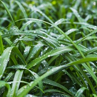 Hierba delicada con gotas de agua