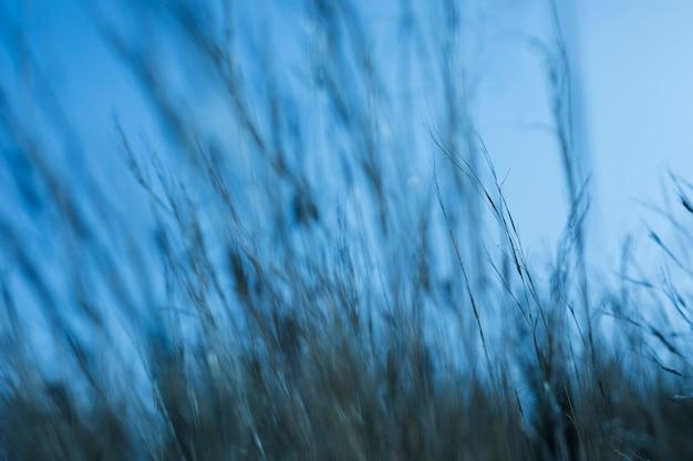 Hierba desenfocada contra el cielo azul.