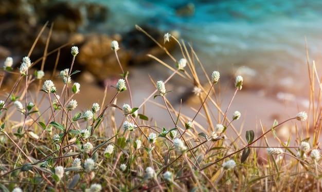 La hierba florece el arbusto con el fondo borroso.