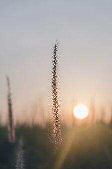 La hierba florece en jardín con la luz de la mañana o de la tarde, concepto de crecimiento de la vida.