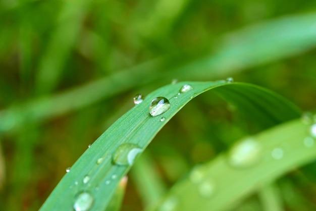 Hierba fresca con gotas de rocío de cerca