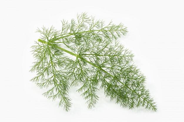 Hierba fresca de hinojo aislada en blanco. hierba aromática foeniculum vulgare