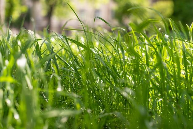Hierba fresca en la luz del día de verano