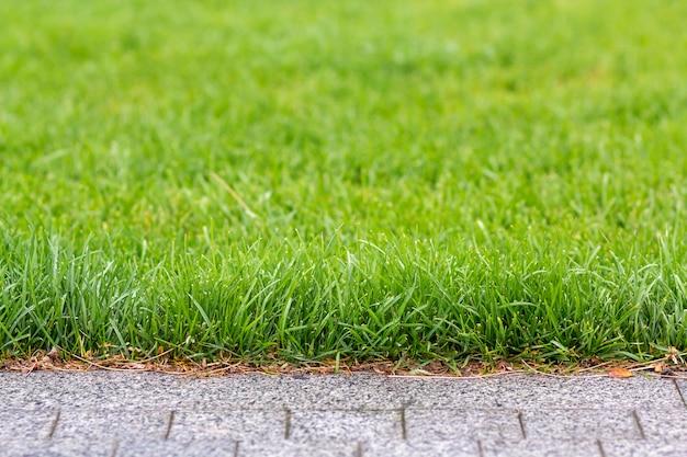 Hierba fresca verde que crece a lo largo del camino gris del asfalto, textura para el fondo. verde brillante césped soleado, jardín o patio trasero y textura de fondo.