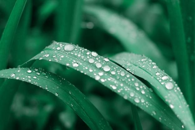Hierba con gotas de agua, moderno neo mint natural