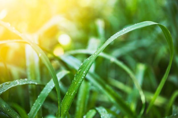Hierba mojada en un día soleado