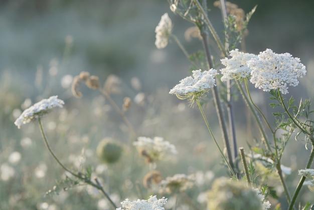 Hierba de prado salvaje bajo luz del sol de la mañana.