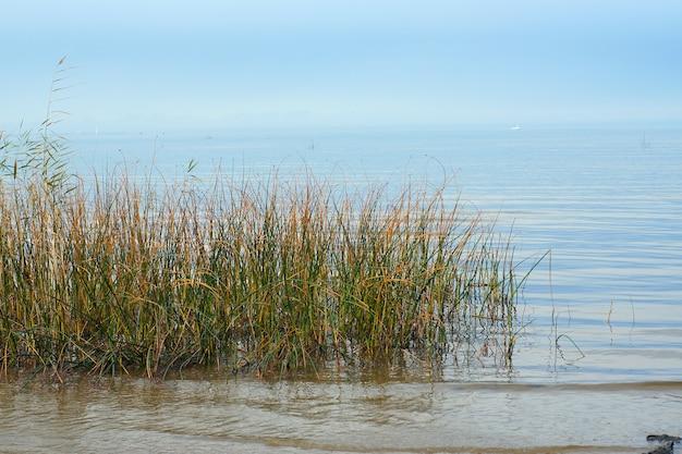 Hierba que crece en el agua de la bahía con agua azul en el fondo de cielo despejado.
