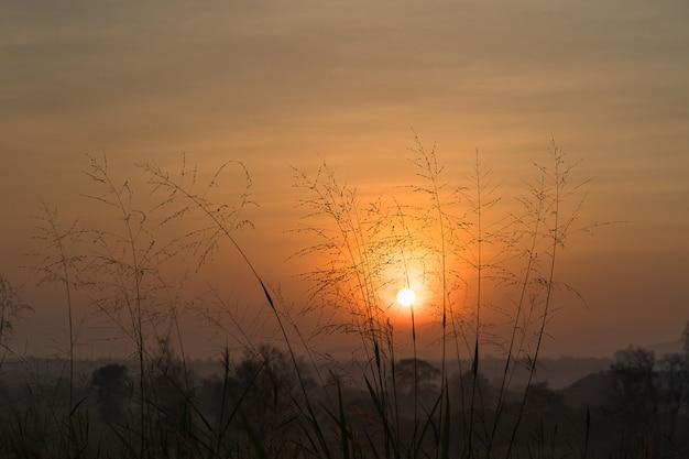 Hierba salvaje en el amanecer de la mañana