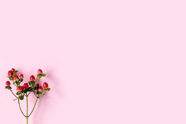 Hierba de san juan roja, frutos rojos en una rama, flor inusual sobre un fondo rosa pastel con copyspace
