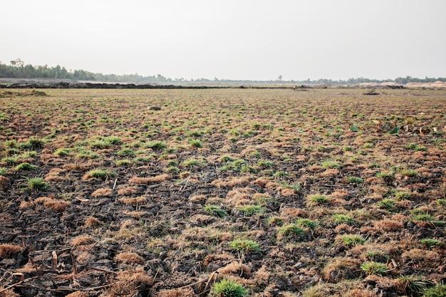 Hierba seca en el campo con salida del sol.