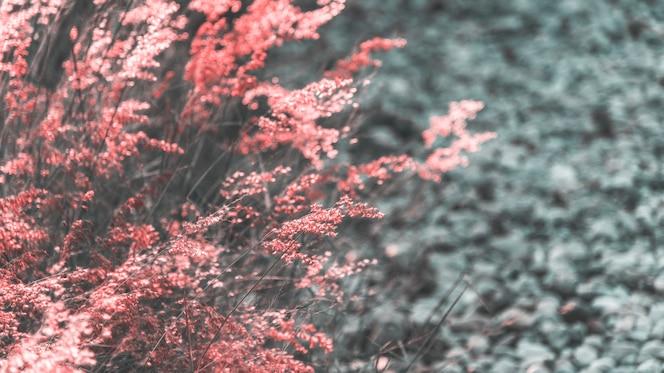 Hierba silvestre creciendo en la naturaleza