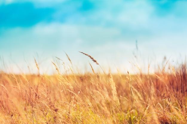 Hierba de verano en un hermoso día