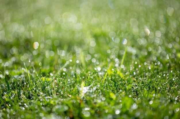 Hierba verde brillante con gotas de rocío, hermoso bokeh