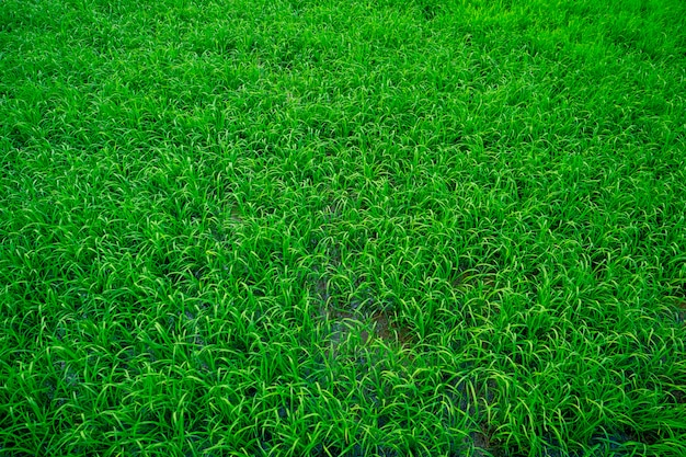Hierba verde brillante
