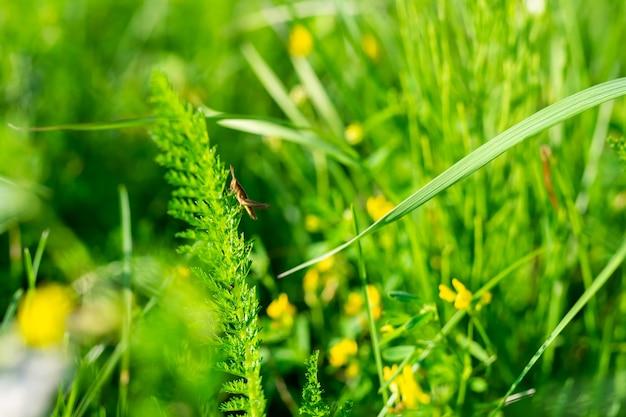 Hierba verde en colores brillantes, textura de fondo. foto de alta calidad